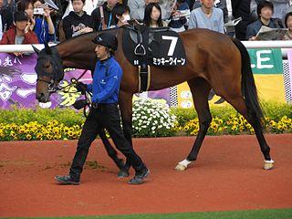 Mikki Queen Japanese Thoroughbred racehorse