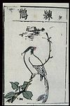 Ming herbal (painting); Paradise flycatcher Wellcome L0039450.jpg