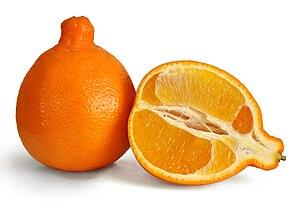 Tangelo - A tangelo fruit (Cushman Honeybells)