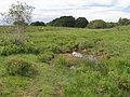 Mire in Backley Bottom, New Forest - geograph.org.uk - 470645.jpg