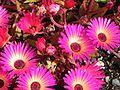 Mittagsblumen.jpg