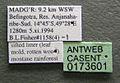 Monomorium fisheri casent0173601 label 1.jpg