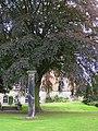 Monument within School Gardens - geograph.org.uk - 433253.jpg