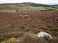 Moorland north of Auchnagallin - geograph.org.uk - 1462715.jpg