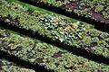 Moss, Jodrell Bank 1.jpg