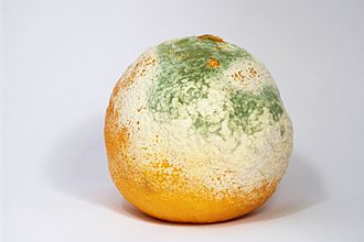 Mold - Mold growing on a clementine