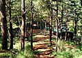 Mt.kalugongpark.jpg