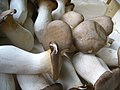 Mushrooms (4701373348).jpg