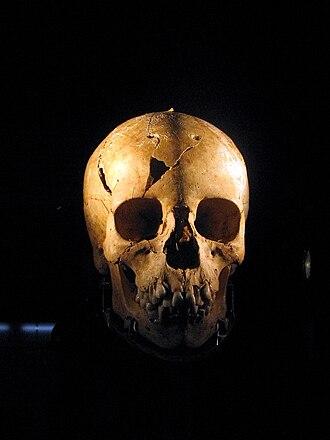 Myrtis - Myrtis' skull