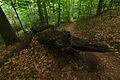 Národná prírodná rezervácia Stužica, Národný park Poloniny (08).jpg