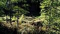 NSG Mühlenbachtal Rumbeck fd (17).JPG