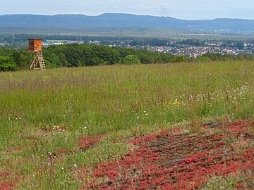 NSG Magerrasen am Eulenkopf, im Hintergrund liegt Weilerbach.jpg