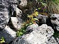 Nacionalni Park Sutjeska 3.jpg