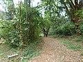Nairobi Arboretum Park 22.JPG