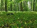 Nationalpark Hainich craulaer Kreuz 2020-06-03 25.jpg