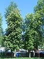 Nature in Smolensk - 65.jpg