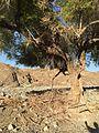 Nature pk1.jpg