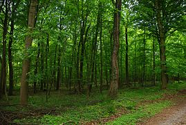Naturschutzgebiet Appelhorn bei Bredelem, Wald 3, NSG BR 141.jpg