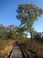 Naturschutzgebiet Ewiges Meer 31-10-2018 Chr Didillon DSC01778 (60).jpg