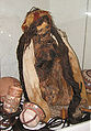 Nazca Mummy in the Museo Historical Regional, Cusco.jpg