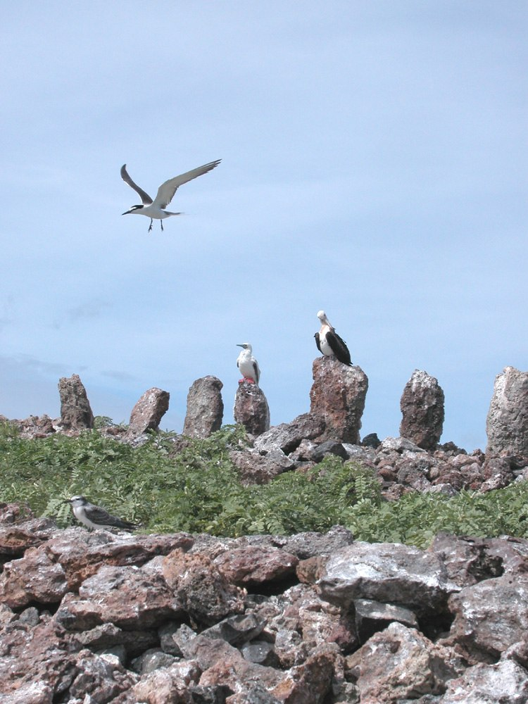 Necker Island Standing Stones