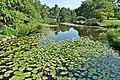 Nenúfares del Jardín Botánico - panoramio.jpg
