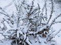 Neve em Entalada, Castro Laboreiro.jpg