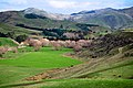 New Zealand - Rural landscape - 9758.jpg