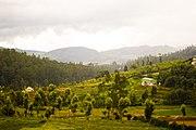Nilgiri Hills
