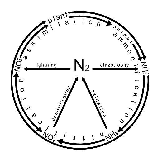 Nitrogen Cycle Wikiwand