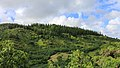 Nonou Forest Reserve, Kapaa (503191) (16539438474).jpg