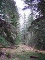 Novar Forest - geograph.org.uk - 155720.jpg