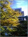 October University Freiburg Plaza - Master Botany Photography 2013 Development Building - panoramio.jpg