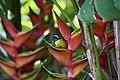 Oiseau et plante tropicale.jpg