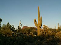 Old-Saguaros-inside-the-Saguaro-National-Park-Arizona.jpg