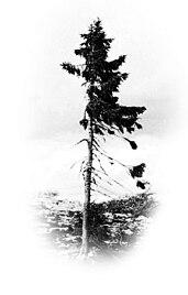 деревья список