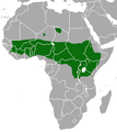 Olive Baboon area.png