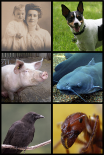 Omnivore organism consuming a variety of foods, usually including both plants and animals