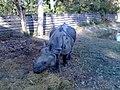 One horned rhino(ek singe gaida).jpg