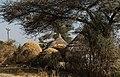 Oromia IMG 5073 Ethiopia (39582679461).jpg