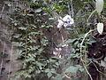 Orto botanico di Napoli 64.jpg