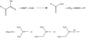 Branched-chain alpha-keto acid dehydrogenase complex - Figure 1: This is the overall reaction catalyzed by the branched-chain alpha-ketoacid dehydrogenase complex.