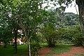 Pétropolis les jardins du palais impérial.jpg