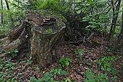 Přírodní rezervace Skalské rašeliniště (11).jpg