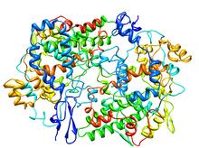 PROSTAGLANDIN H2 SYNTHASE-1 COMPLEX.png