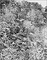 PSM V86 D042 Tree ferns at bottom of valley.jpg