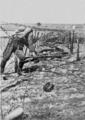 PSM V88 D066 Dead russian solder in poland 1916.png