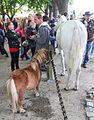 Paardenmarkt in Heenvliet.jpg