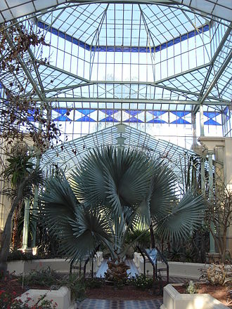 Adelaide Botanic Garden - Inside the Palm House