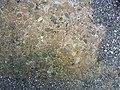 Parco archeologico di Baia - Ninfeo punta Epitaffio - mosaico 2.jpg